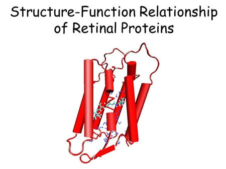 Structure-Function Relationship of Retinal Proteins.