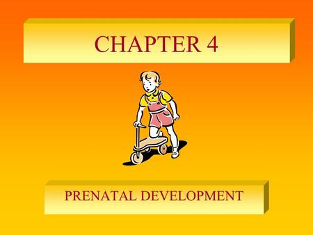 CHAPTER 4 PRENATAL DEVELOPMENT.
