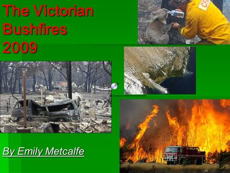 The Victorian Bushfires 2009 By Emily Metcalfe.  The Victorian Bush fires 2009, are a series of bushfires ignited over the state of Victoria, starting.