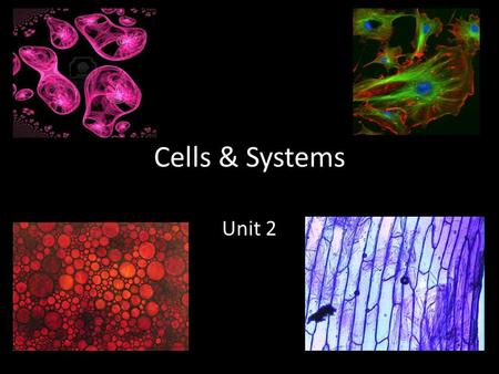 Cells & Systems Unit 2. What Does it Mean to be Living? What do all of these things have in common?