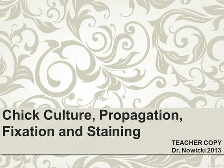 Chick Culture, Propagation, Fixation and Staining TEACHER COPY Dr. Nowicki 2013.