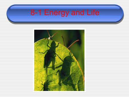 8-1 Energy and Life. Autotrophs and Heterotrophs  Living things need energy to survive.  This energy comes from food. The energy in most food comes.