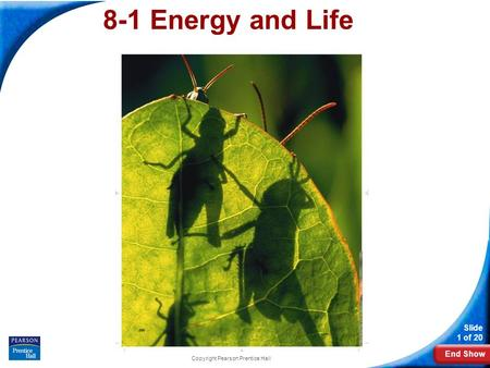 End Show Slide 1 of 20 Copyright Pearson Prentice Hall 8-1 Energy and Life.