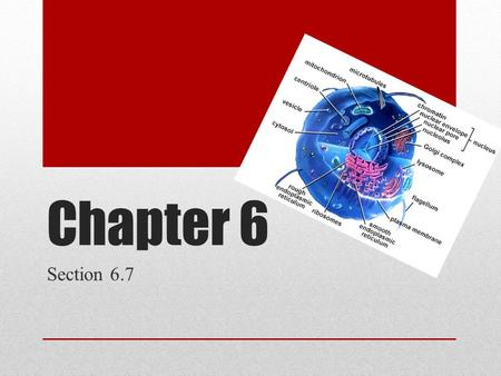 Chapter 6 Section 6.7. Vocabulary You Need To Know Cell wall Primary Cell Wall Middle Lamella Secondary Cell Wall ECM(Extracellular matrix) Collagen Proteoglycans.