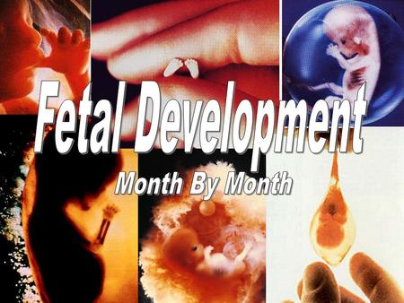 Fetal Development Month By Month.