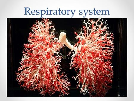 Respiratory system. Respiratory System Function: Bringing Oxygen into the body, and removing carbon dioxide and water vapor.