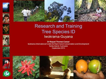 Research and Training Tree Species ID Iwokrama-Guyana Dr Raquel Thomas-Caesar Iwokrama International Centre for Rain Forest Conservation and Development.