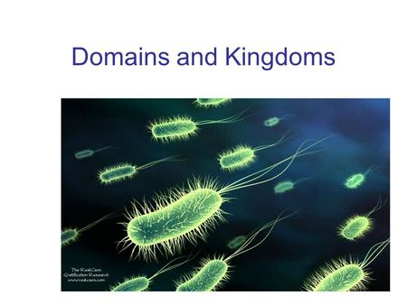 Domains and Kingdoms. Domain Bacteria Eubacteria – prokaryotic and cell walls contain peptidoglycan. Some are aerobic and some are anaerobic. Most are.