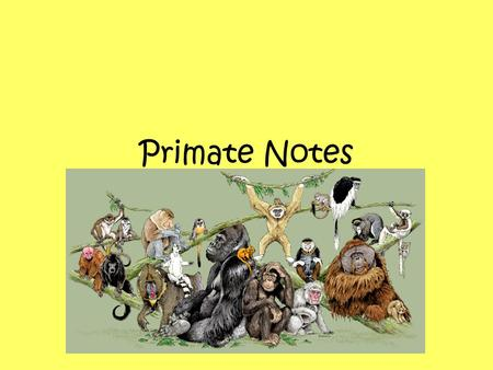 Primate Notes. Primates include the most familiar of the placental mammals. Most primates live in tropical or sub- tropical regions of the Americas, Africa,