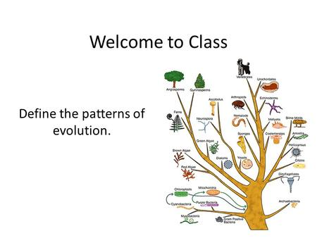Welcome to Class Define the patterns of evolution.
