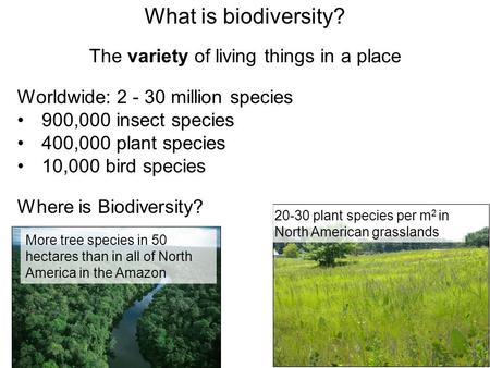 What is biodiversity? The variety of living things in a place Worldwide: 2 - 30 million species 900,000 insect species 400,000 plant species 10,000 bird.