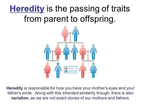 Heredity is the passing of traits from parent to offspring. Heredity is responsible for how you have your mother's eyes and your father's smile. Along.