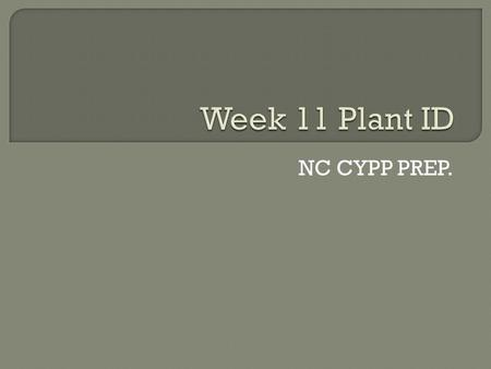 NC CYPP PREP..  Common name: Hinoki falsecypress  Description: 1. Height: 50-75 ft. 2. Spacing: 5-20 ft. 3. Exposure: Sun to part shade 4. Foliage: