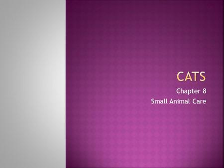 Chapter 8 Small Animal Care.  Describe nutritional needs of cats  Describe difficulties encountered when training cats.  Describe equipment needed.