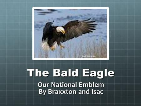 The Bald Eagle Our National Emblem By Braxxton and Isac.