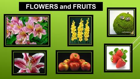 FLOWERS and FRUITS. Angiosperms is the name given to plants that produce flowers. The flower contains the reproductive organs of a plant. Male Reproductive.