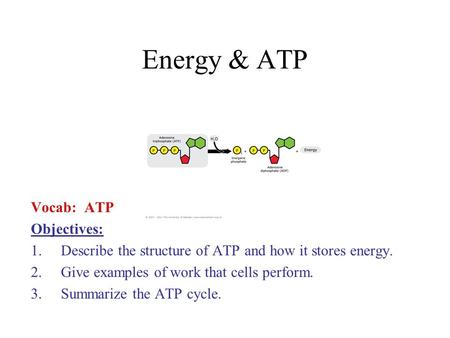 Energy & ATP Vocab: ATP Objectives: 1.Describe the structure of ATP and how it stores energy. 2.Give examples of work that cells perform. 3.Summarize the.