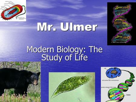 Mr. Ulmer Modern Biology: The Study of Life. The Class Web Site WEB WEB There is a 150 page class web site. There is a 150 page class web site. It is.