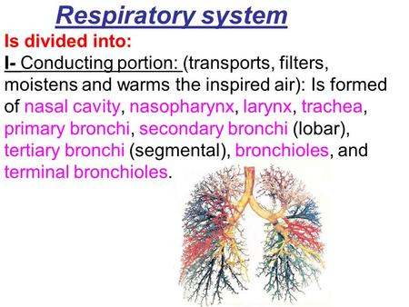 I- Respiratory system Is divided into: I- Conducting portion: (transports, filters, moistens and warms the inspired air): Is formed of nasal cavity, nasopharynx,