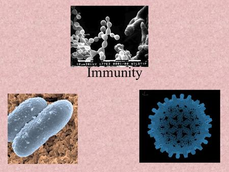 Immunity Immunity Objectives Explain how the immune system works. Explain the difference between passive and active immunity. Discuss the dangers of.