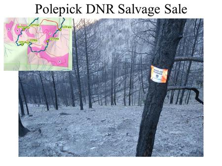 Polepick DNR Salvage Sale. Polepick debris flows and flooding Waypoint 120.
