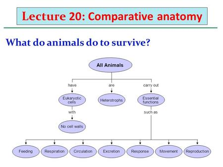 Lecture 20: Comparative anatomy What do animals do to survive? havearecarry out withsuch as All Animals FeedingRespirationCirculationExcretionResponseMovementReproduction.