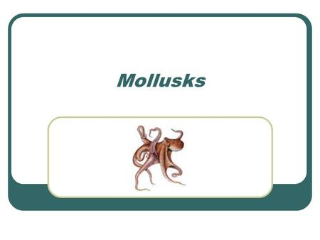 Mollusks. Characteristics of Mollusks Mollusks are invertebrates Mollusks have soft bodies Mollusks have bilateral symmetry Mollusks have a digestive.