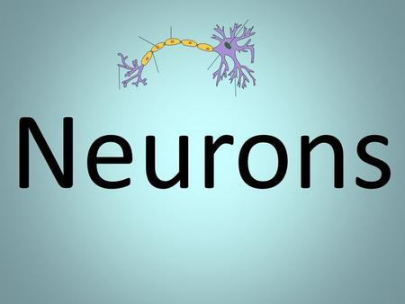Neurons.  Messages, in the form of electrical impulses, constantly travel back and forth between the brain and other parts of the body.  A special cell.