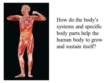 How do the body's systems and specific body parts help the human body to grow and sustain itself?
