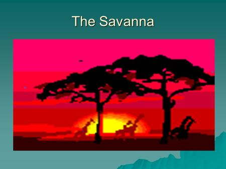 The Savanna. Average Rainfall TTTThe average rainfall is 20-47 inches a year.