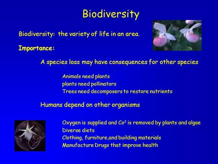 Biodiversity Biodiversity: the variety of life in an area. Importance: A species loss may have consequences for other species Animals need plants plants.