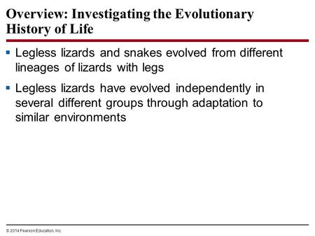 © 2014 Pearson Education, Inc. Overview: Investigating the Evolutionary History of Life  Legless lizards and snakes evolved from different lineages of.