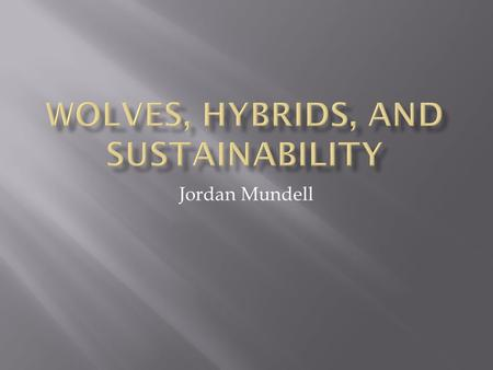 Jordan Mundell.  Ecological importance  Wolf re-introduction  Politics  Media  Education and wolf hybrids  Big picture?