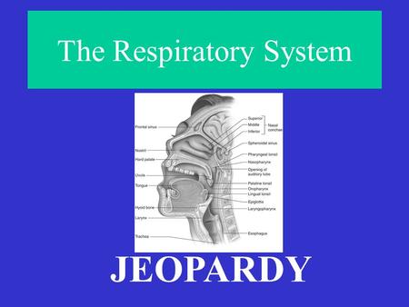 The Respiratory System JEOPARDY AirheadExtraordinairyBreathtakingOut of Breath ♫ Take My Breath Away♪ Final Jeopardy! #1 #2 #3Final Jeopardy! #1 #2 #3.