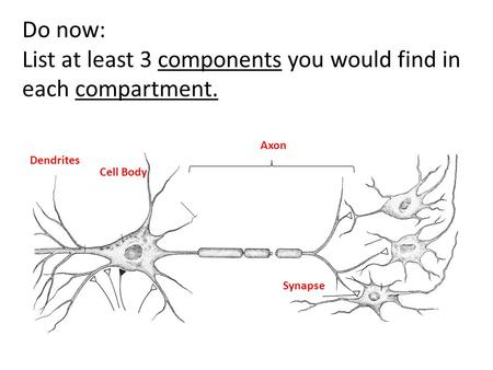 Dendrites Cell Body Axon Synapse Do now: List at least 3 components you would find in each compartment.
