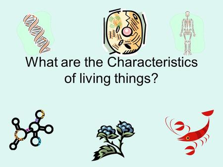 What are the Characteristics of living things?. Biology is the study of life. Biotic— something alive Abiotic—something not alive.