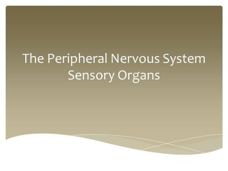 The Peripheral Nervous System Sensory Organs.  The eye is the sensory organ related to vision.  It detects light variations, colours, and can adapt.