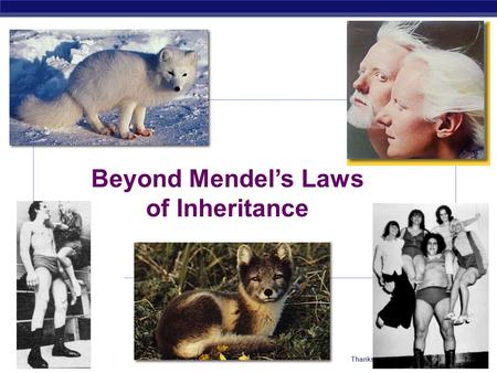 AP Biology Thanks as always to Kim Foglia Beyond Mendel's Laws of Inheritance.