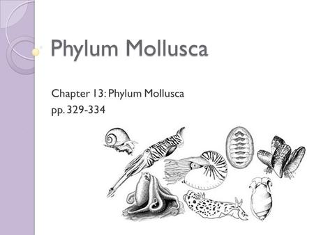 Phylum Mollusca Chapter 13: Phylum Mollusca pp. 329-334.