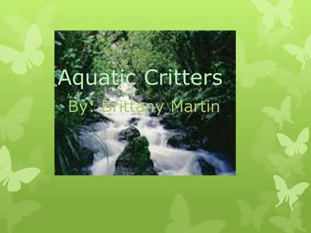 Aquatic Critters By: Brittany Martin. Benthic Macroinvertebrates  They are organisms without backbones and they live in the bottom substrates of the.