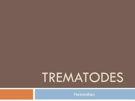 TREMATODES Helminthes. In general:  They are flat worms  Provided with suckers as organs of attachment  Usually as leaf shape  Commonly known as Flukes.