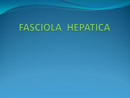 FASCIOLA hepatica Disease: Fascioliasis & liver rot in animals. Distribution: - Common in cattle & sheep raising countries.