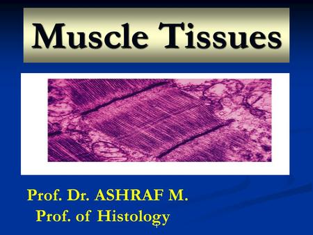 Muscle Tissues Prof. Dr. ASHRAF M. Prof. of Histology.