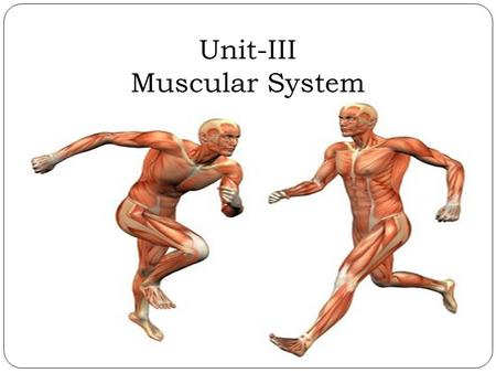 Unit-III Muscular System. Muscular System The muscular system is the anatomical system of a species that allows it to move. The muscular system makes.