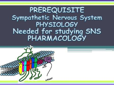Sympathetic Nervous System Needed for studying SNS PHARMACOLOGY
