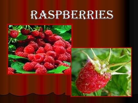 how to take care of raspberry bushes