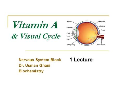 Vitamin A & Visual Cycle Nervous System Block Dr. Usman Ghani Biochemistry 1 Lecture.