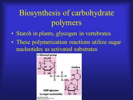 Biosynthesis of carbohydrate polymers Starch in plants, glycogen in vertebrates These polymerization reactions utilize sugar nucleotides as activated substrates.