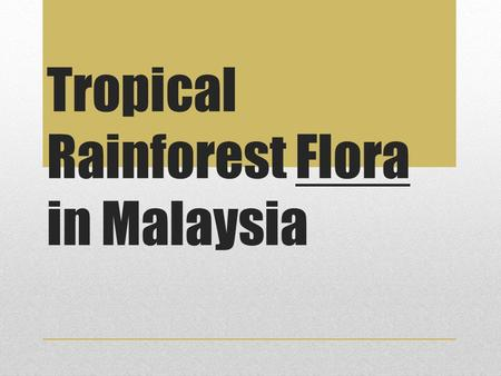 Tropical Rainforest Flora in Malaysia.  The forests in Malaysia are mostly dominated by trees from the Dipterocarpaceae family, hence the term 'dipterocarp.