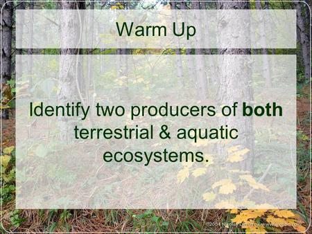Warm Up Identify two producers of both terrestrial & aquatic ecosystems.